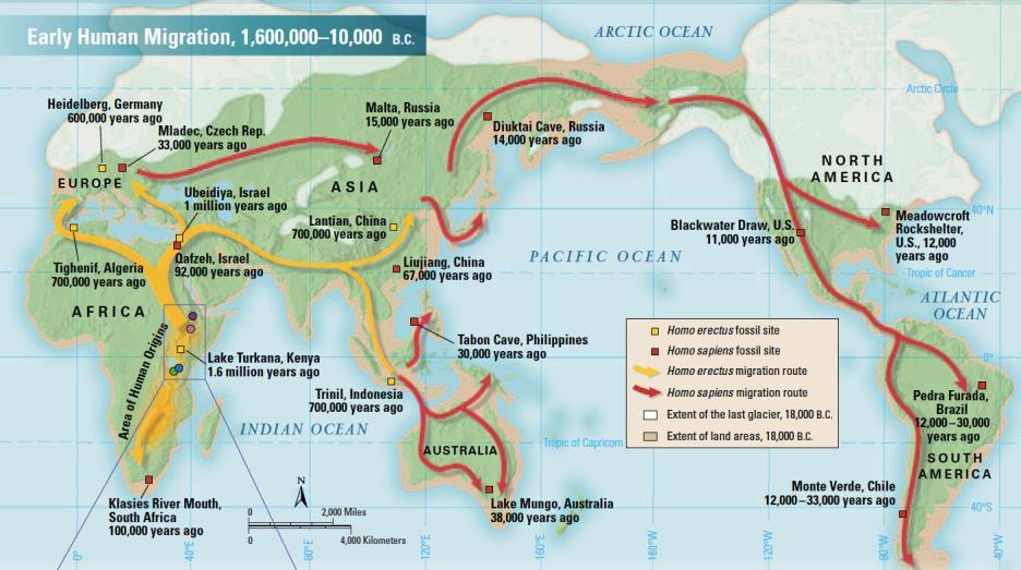 oceans dropped, causing land bridges to appear Early humans responded by adapting to the cold or moving to