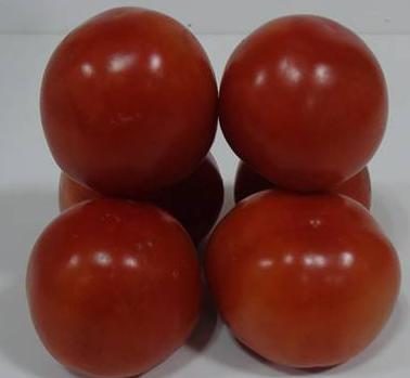 FOOD TECHNOLOGY I 21.3 Nutritional and Therapeutic Effects of Tomato & Tomato Products Tomatoes are good source of ascorbic acid, which constitutes about 15-20 mg per 100 g of edible parties.