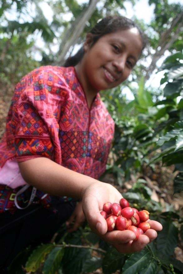 Farmers and workers win Fairtrade helps workers and farmers to earn a decent living Fairtrade producers receive a Fairtrade Premium, additional funds for community or business development The