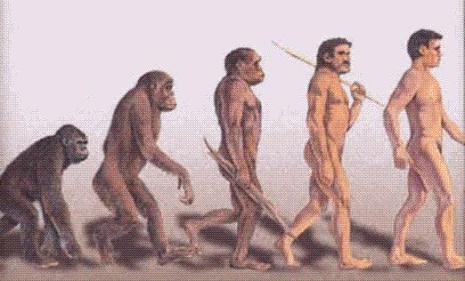 Hominids and Early Humans Homo habilis handy man Became more like humans over time Found in 1960s by Louis Leakey Closely related to humans Homo erectus upright man Scientists