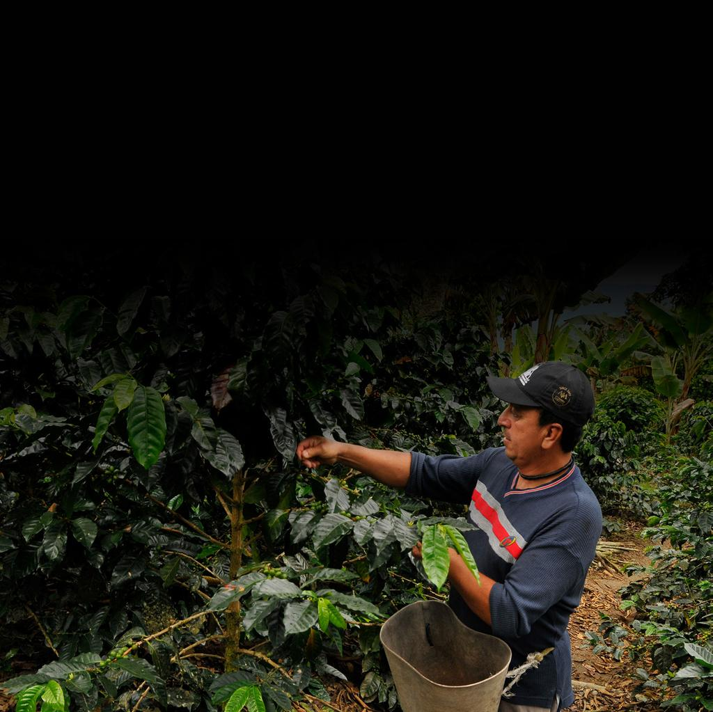 shared value and vibrant coffee communities. From the cherry... The Nespresso AAA Sustainable Quality Program is our solution for ensuring sustainable agricultural practices and for building resilience.
