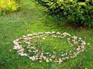 Fairy Ring I have one of these in my garden may be an idea to make on at the site from wooden and ceramic mushrooms https://en.wikipedia.