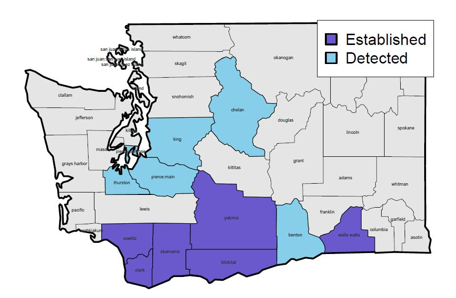 Current Known Distribution of BMSB in WA State Whatcom Skagit Snohomish Photo by