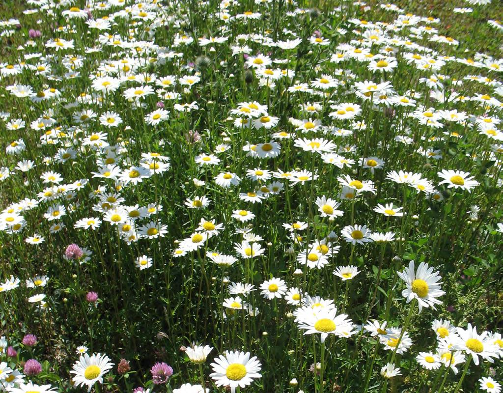 Noxious Weeds Noxious Weeds have the ability to spread rapidly, cause severe crop losses and