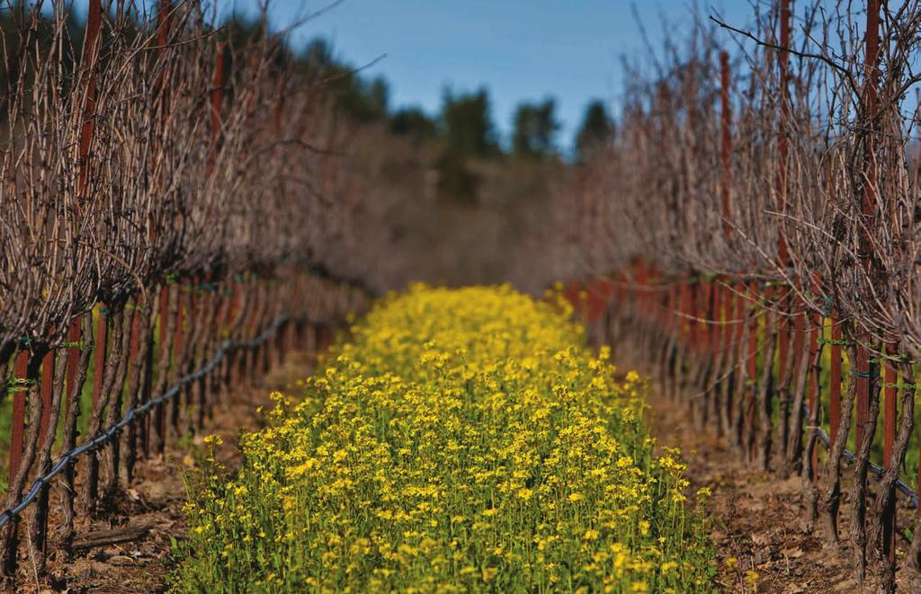 certified sustainable: annual report 2017 VINEYARDS The following 2017 data demonstrates the 1,099 vineyards commitment to sustainable practices, many of which go above and beyond minimum