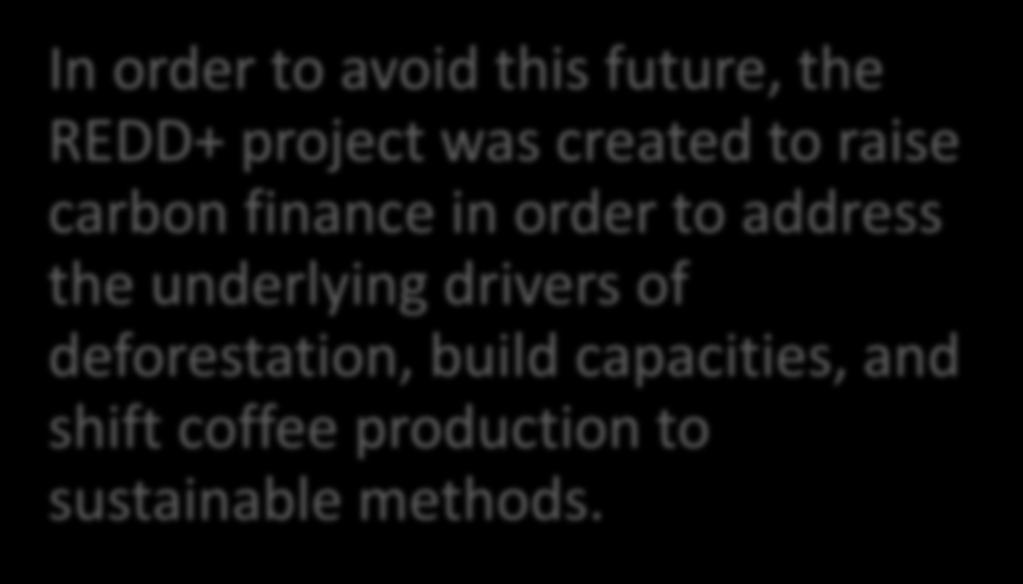 In order to avoid this future, the REDD+ project was created to raise carbon finance in order to address the
