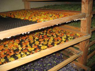 i-natural drying: 2. Preservation of plant material A- Drying of plant materials.