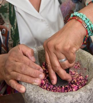 3- Grinding of the dried plants.
