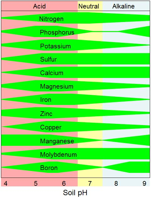 (phloem import) ph Juice ph is not very responsive to soil K + ( Malate ) Ca 2+ and K + compete for root uptake: Soil