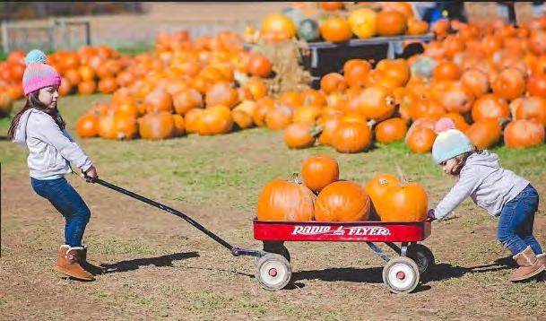 Starting the first of September, they will open up their corn mazes, hay rides and pumpkin patch. Austin believes when more people come into the county, money is spent outside of the farm as well.