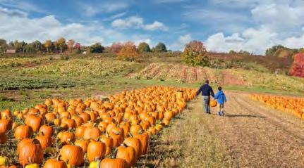 INDUSTRY news with Editor Jamie Macready Reader's Digest: The best pumpkin patch in every state and early frosts don t make for great squash-growing, so pumpkin culture isn t quite as big a deal up