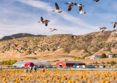 That said, if you re near the Mat-Su Valley, bundle up and take a trip out to the Reindeer Farm to pick up some pumpkins, meet the caribou (reindeer), and play harvest games like rubber ducky races