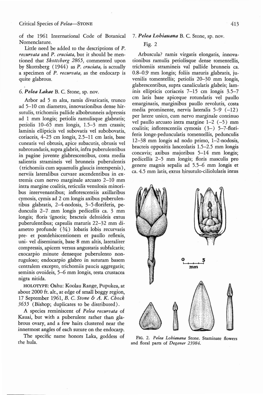 Critical Species of Pelea-SToNE 413 of the 1961 International Code of Botanical Nomenclature. Little need be added to the descriptions of P. recurvata and P.
