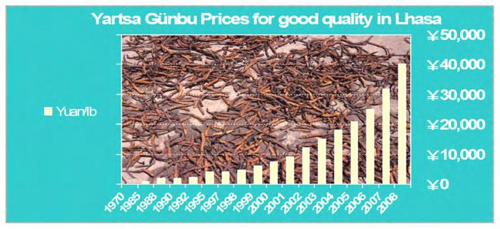 igure 6: Dbyar rtswa dgun bu wholesale prices in yuan per pound in recent years for medium size in Lha sa, TAR.