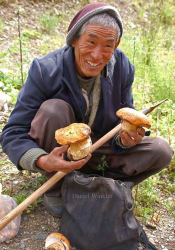Winkler: The Mushrooming ungi Market in Tibet 6 fruiting of the season can drive prices to 500 per kilogram and higher, whereas an exceptional bumper crop can reduce prices to 10 per kilogram.