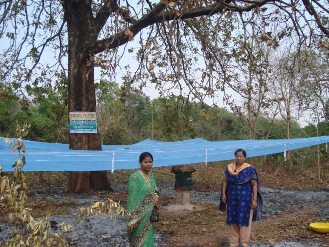 Other value chain interventions in Mahua Net collection system for mahua Flower damage Nil, Tradition method - 22.