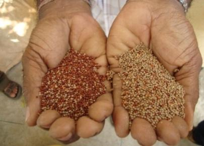 20/- per kg of malt Farmer s benefit Used as