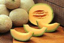 MELON 141 Today s melons are derived from seed carried out of Africa, probably on the backs of camels swaying northward across the Sahara in the time of the pharaohs.
