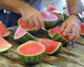 176 LOST CROPS OF AFRICA Small watermelons often called palm melons because they fit into the palm of the hand are becoming increasingly popular in the United States, and even smaller ones are