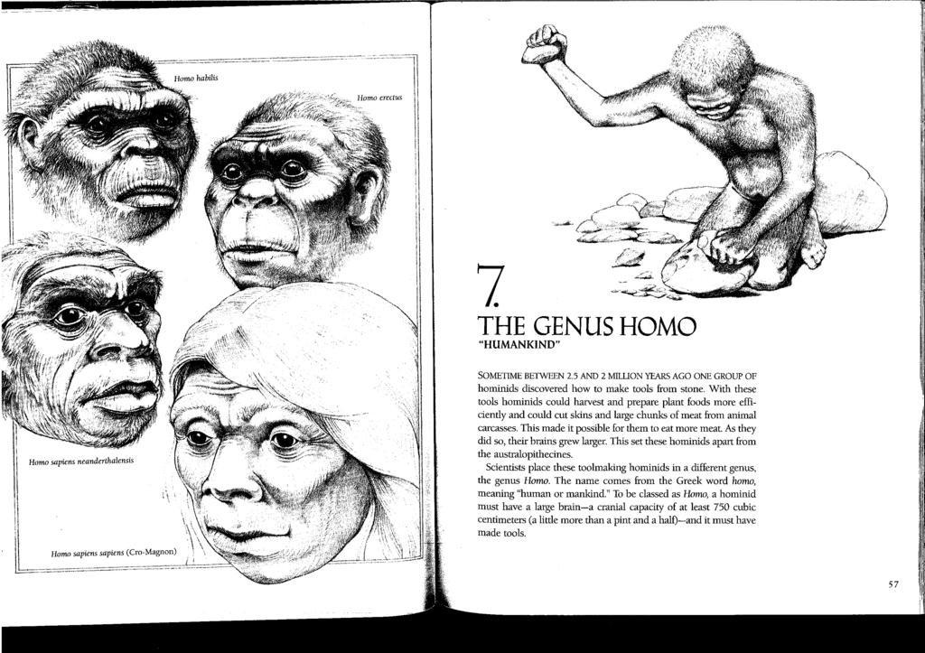 The Genus Homo Overview There are five subspecies of hominids in the genus Homo: Homo habilis, Homo erectus, Homo sapiens, Homo sapiens neanderthalenis and Homo sapiens sapiens. Between 2.