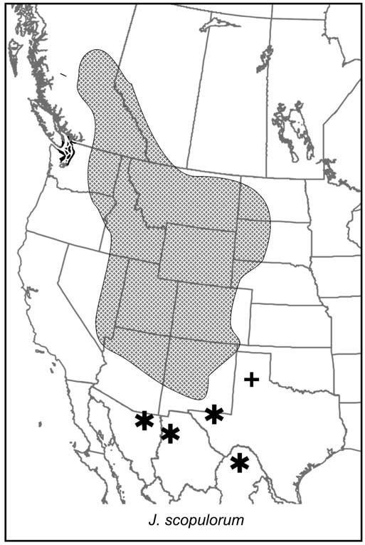 Juniperus Of Canada And The United States Taxonomy Key And