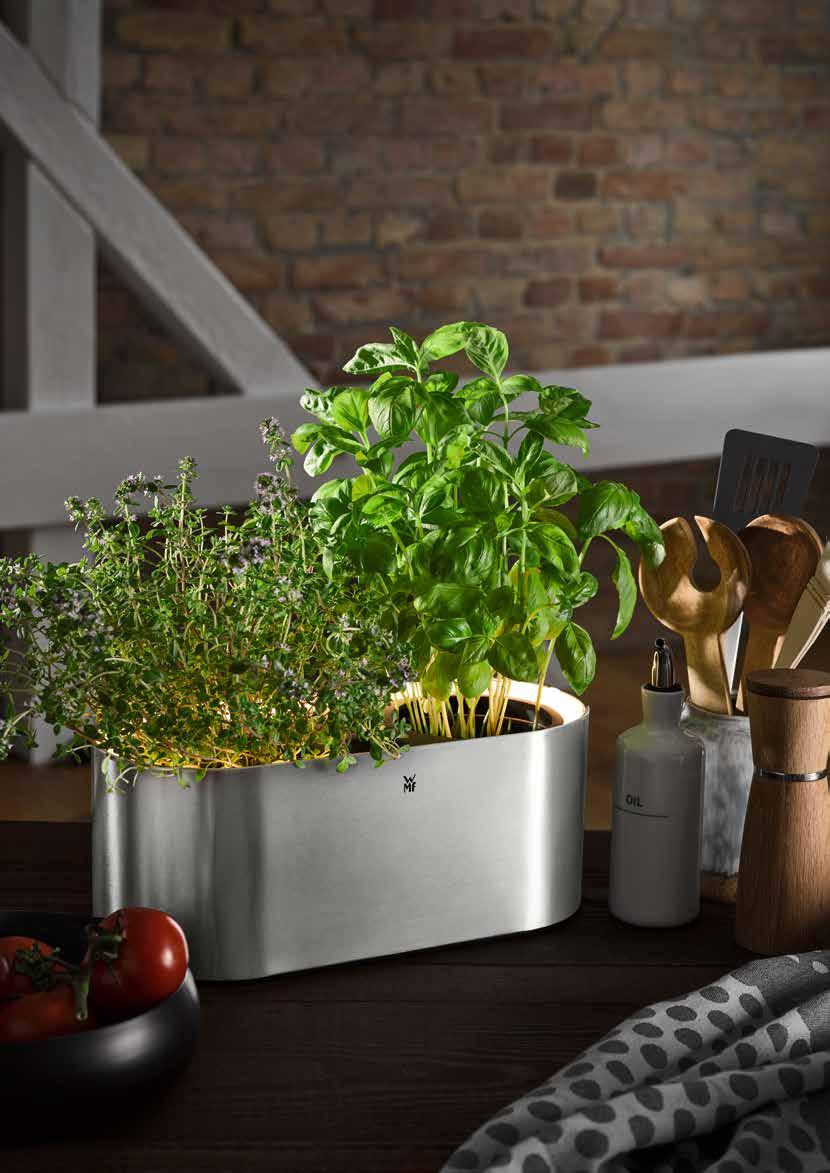 Let herbs grow and shine. Showcase decorative greens.