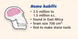 Eastern Africa in an area called the, between 3 and 4 million years ago Homo habilis Type