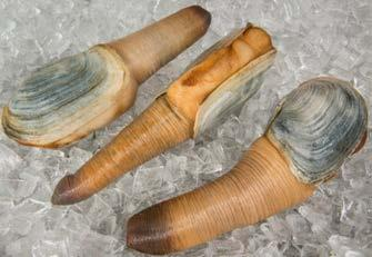 B.C. INTERNATIONAL EXPORTS - INVERTEBRATE & MARINE PLANT PRODUCTS saw continued notable growth in the value of geoduck exports up 50 per cent over 2016 reaching $57 million with shipments to 19
