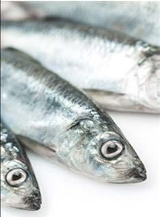 B.C. INTERNATIONAL EXPORTS OTHER SEAFOOD SPECIES & PRODUCTS International exports in the other seafood products and species category increased by eight per cent, rising from $131 million in 2016 to