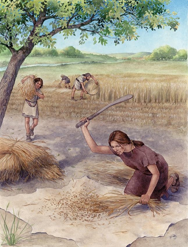 by trading over land and sea 3. The Neolithic Age ended about 3000 B.C.E., with the discovery of how to A. make metal tools. CORRECT B. weave linen cloth. C. tame wild animals. D. build brick houses.